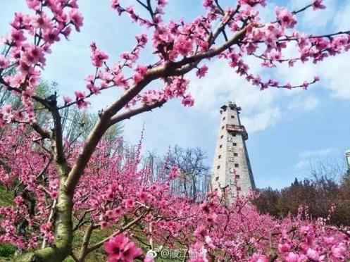 taohua